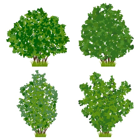 Green shrubs vector set