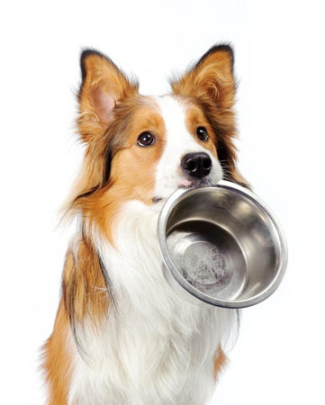 dog with empty bowl