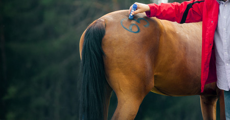 Veterinary makes marking on a horse at veterniarian of equestrian event