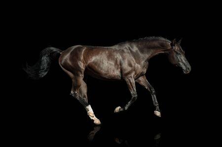 Photo pour Black horse on a black background running fast - image libre de droit
