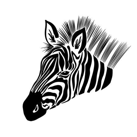 Illustration for Monochrome zebra. Head to profile graphics. Vector illustration - Royalty Free Image