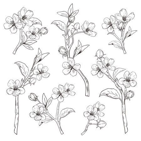 Ilustración de Blooming tree. Set collection. Hand drawn botanical blossom branches on white background. - Imagen libre de derechos