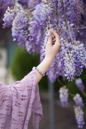 Photo pour A girl`s hand touches the branches of a beautiful blooming flowers wisteria in spring in the garden. - image libre de droit