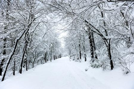 Photo pour Winter road covered with fresh snow - image libre de droit