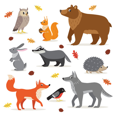 Photo pour Set of forest, woodland animals isolated on white background, owl, squirrel, hare, bear, fox, wolf, badger, hedgehog bullfinch and fallen leaves vector illustration - image libre de droit