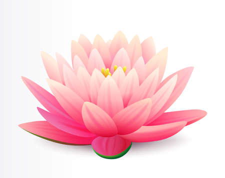 Illustration pour Beautiful realistic pink lotus flower isolated on white background, water plant, vector illustration. Flower for cosmetic products cover. - image libre de droit