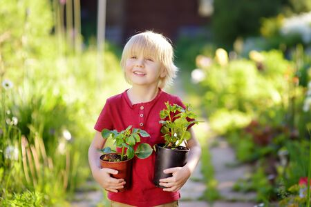 Photo for Little boy holding seedling in plastic pots on the domestic garden at summer sunny day. Mommy little helper. - Royalty Free Image