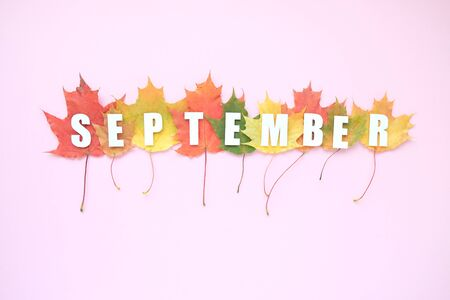 Lettering hello september with autumn leaves red, orange, yellow. Pink background. Letters are cut out of paperの写真素材