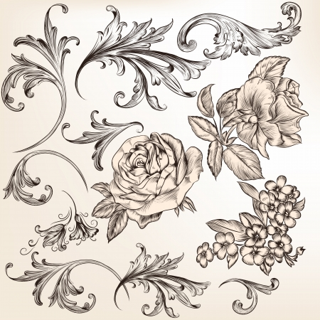 Vector set of swirl and floral elements for design  Calligraphic vector
