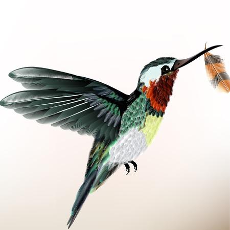 realistic humming bird for design