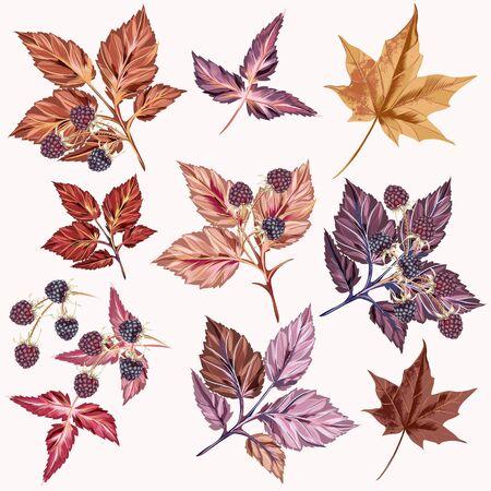 Illustration pour Autumn set of vector detailed leaves and berries - image libre de droit