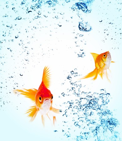 Goldfish is jumping out of water