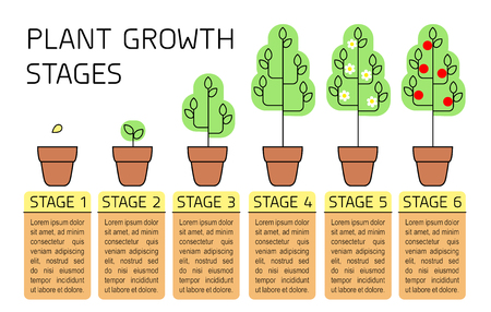 Illustration for Plant growth stages colorful infographics. Line art icons. Planting instruction template. Linear style illustration isolated on white. Planting fruits, vegetables process. - Royalty Free Image