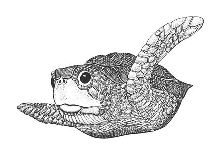 Illustration pour Sea Turtle - Classic Drawn Ink Illustration Isolated on White Background - image libre de droit