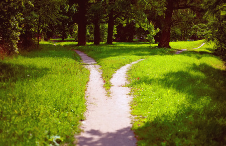 Photo for Splitting the way in the park - Royalty Free Image