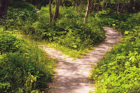 Photo pour In the forest the wide footpath was divided into two narrow, dispersing diversely. Summer landscape. - image libre de droit