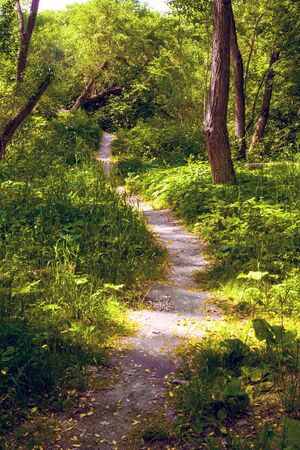 Photo for Uneven protopted trail in forest. Summer landscape - Royalty Free Image