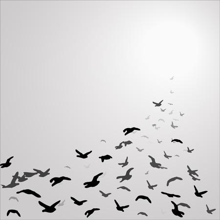 flock of birds in the gray sky flying towards the sun