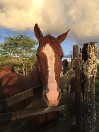 Foto de horse - Imagen libre de derechos
