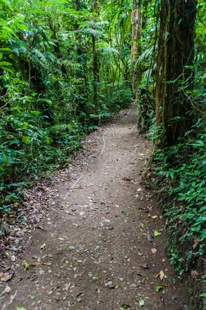 Hiking trail in cloud forest of Reserva Biologica Bosque Nuboso Monteverde, Costa Rica