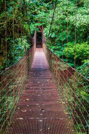 Suspension bridge in the cloud forest of Reserva Biologica Bosque Nuboso Monteverde, Costa Rica