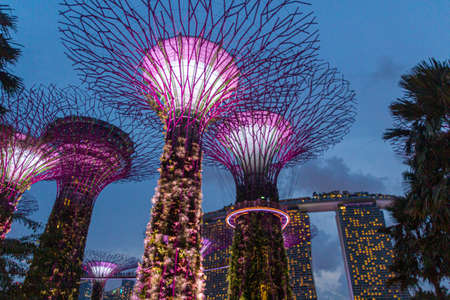 Photo pour SINGAPORE, SINGAPORE - MARCH 11, 2018: Supertree grove at night, Garden by the Bay, Singapore - image libre de droit