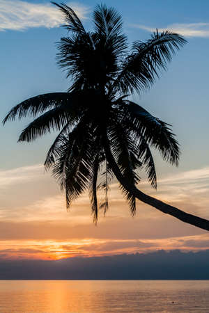 Photo for Sunset view of palm silhouette on Siquijor island, Philippines. - Royalty Free Image