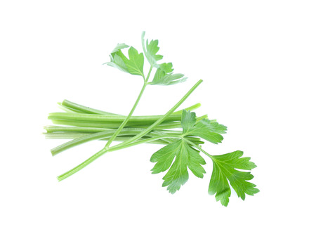 Parsley herb isolated on white