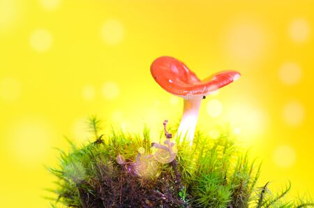 Photo for Red mushroom, dreamy fairy mushroom on yellow - Royalty Free Image