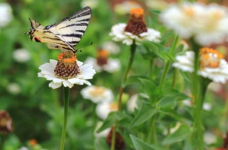 Foto per bella farfalla SI avvicina fiori colorati - Immagine Royalty Free