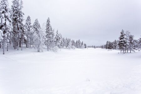 Photo for A frozen landscape in lapland during winter - Royalty Free Image