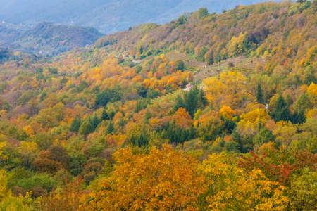 Photo pour The spectacular colors of autumn / Trevigiani hills / Veneto Region - image libre de droit