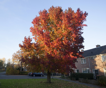 Tree with beautiful colored leaves in autumn