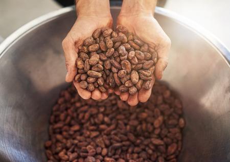 Photo pour Worker holding a handful of cocao beans for chocolate production - image libre de droit