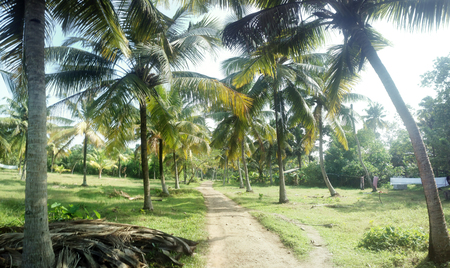 Garden design. Little Garden of coconut trees in courtyard of Indian home
