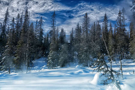 Wonderful winter mountain slope with spruce forest in February in clear weather