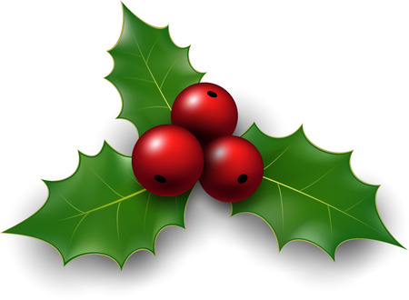 Twig of holly with berry and leaves. Vector illustration.