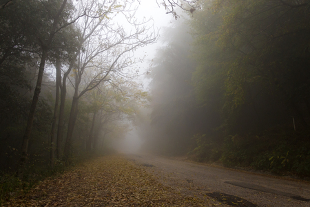 A country road in the fog, with trees at the sides and fallen le