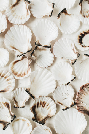 Photo pour Sea shells pattern on white background. Flat lay, top view minimal texture. - image libre de droit