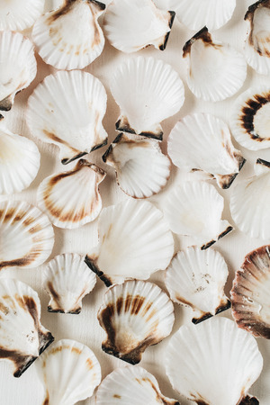 Photo pour Sea shells pattern on white background. Flat lay, top view minimal marine texture. - image libre de droit