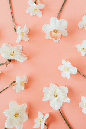 Photo for Round wreath frame copy space template. Narcissus flowers on living coral background. Flat lay, top view minimal floral composition. - Royalty Free Image