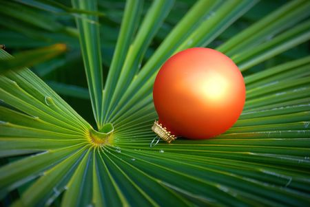 Christmas ornaments located on the palm tree leaf  - it's green winter.