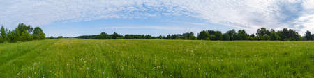 Photo pour Field with grass and blossoms. countryside panorama - image libre de droit