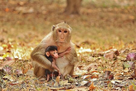 Macaque Monkey Mother and her child