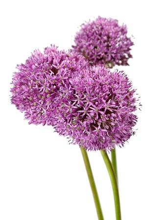 Foto für beautiful flowers  - Lizenzfreies Bild