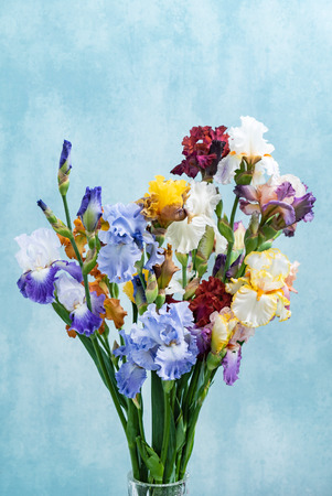 Photo for bunch of colorful irises - Royalty Free Image