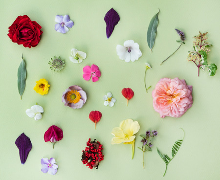 Photo for summer flowers and leaves on the green background - Royalty Free Image