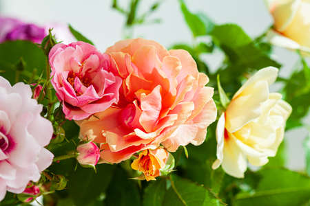 Photo for colorful roses in the vase - Royalty Free Image