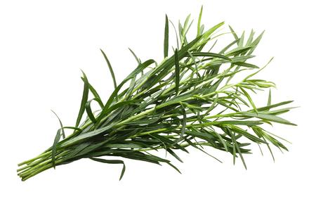 Bundle of fresh Tarragon (Artemisia dracunculus). Clipping path