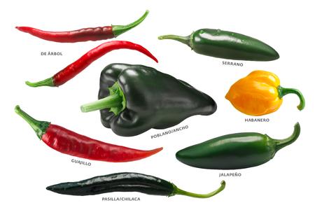 Mexican chile peppers: Arbol, Pasilla, Guajillo, Poblano, Habanero, Jalapeno.
